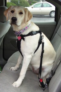 pet-auto-safety-pic-2